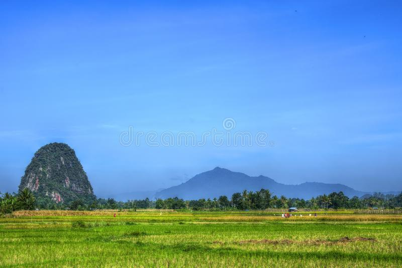 Landscape Photo of Harvest Farm Field Farming Between Mountain and Hill on Clean and Clear Sky. Landscape photo of Rice Field Farmers Harvest and Harvesting stock images