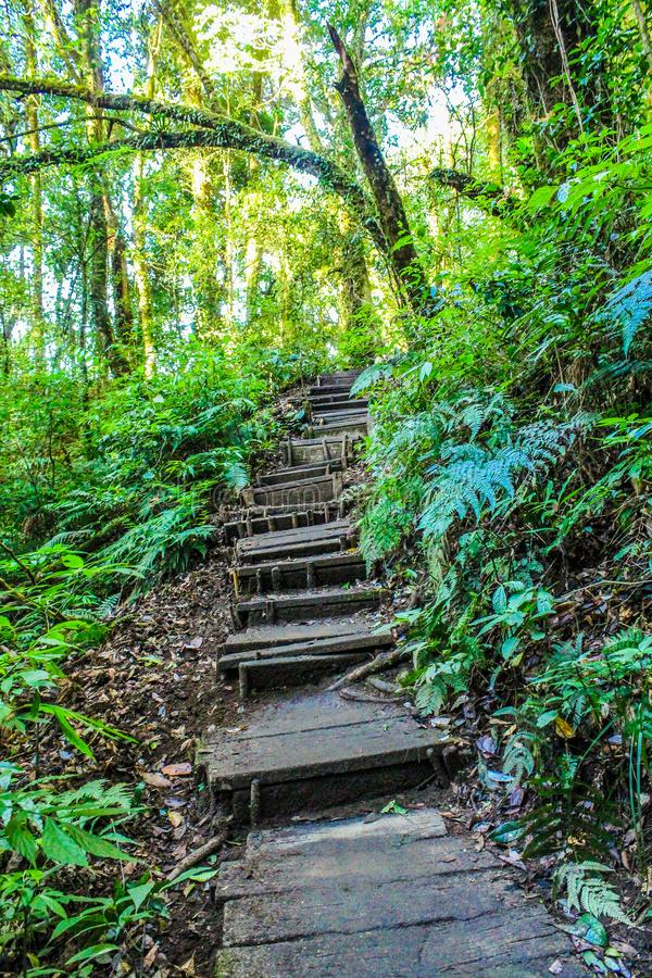 Landscape Photo of Stair in the Forest royalty free stock photo