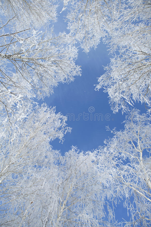 Landscape photo of a trees covered in fresh snow. Landscape photo of a field and trees covered in fresh snow with a clear blue sky stock images