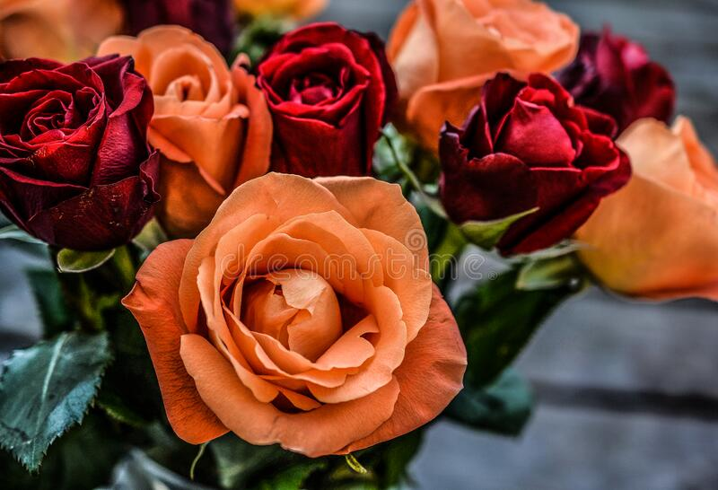 Landscape Photograph of Orange and Red Flowers stock photos