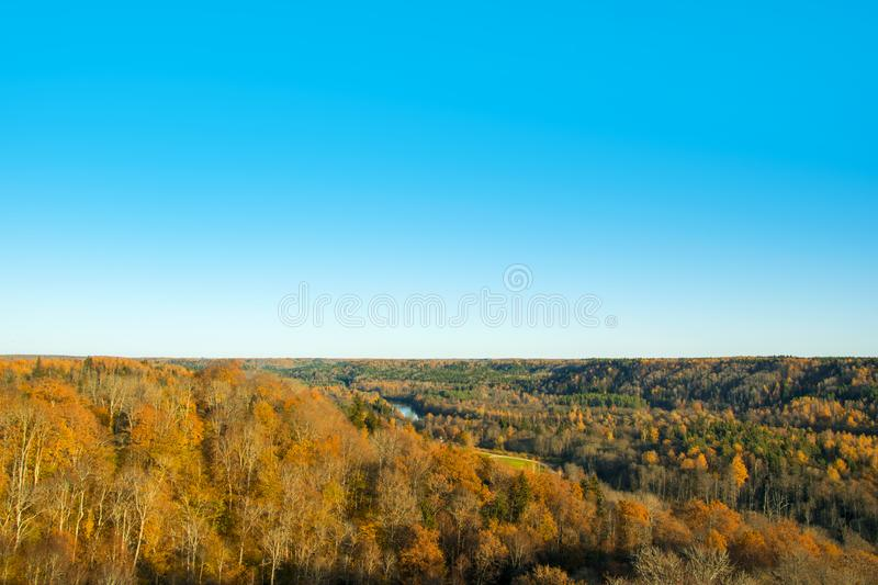 Landscape Photography of Brown Forest Under Blue Clear Sky royalty free stock image