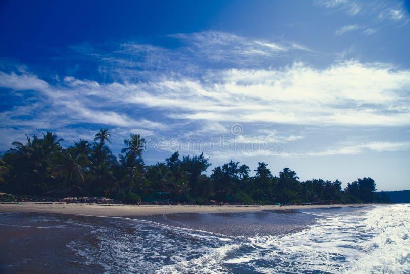 Landscape Photography of Coconut Tree Near Seashore stock photography