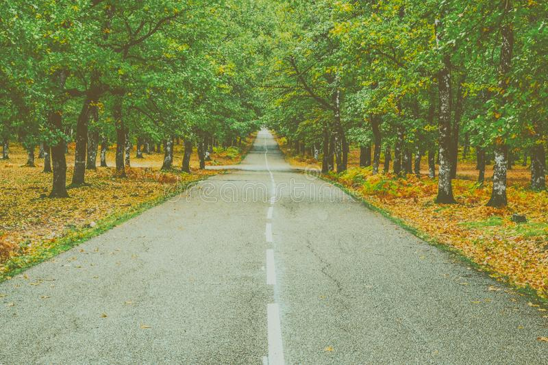 Landscape Photography of Concrete Road Between Trees royalty free stock photo