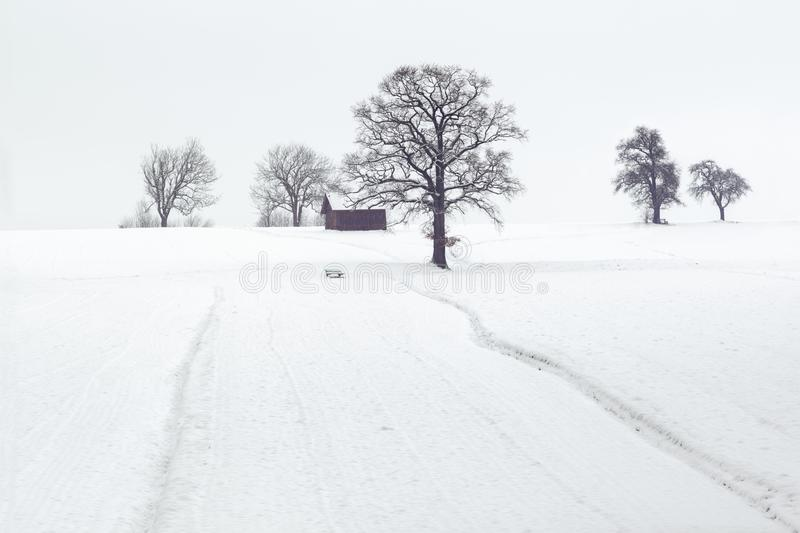 Landscape Photography of Dried Trees on Snow Covered Ground royalty free stock images