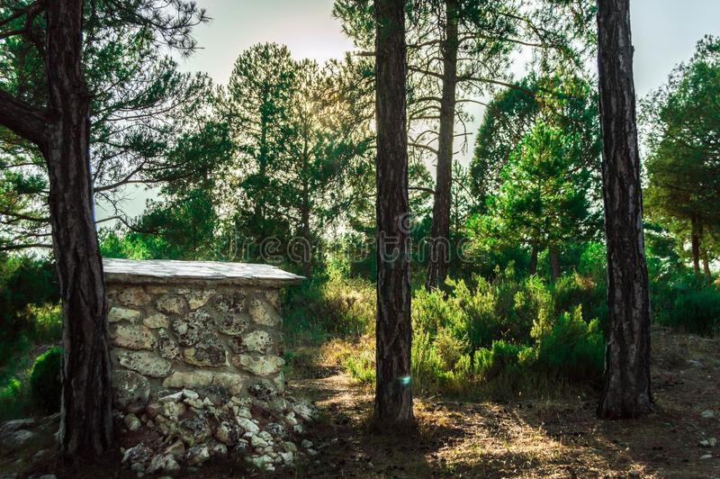 Landscape photography in a forest royalty free stock image
