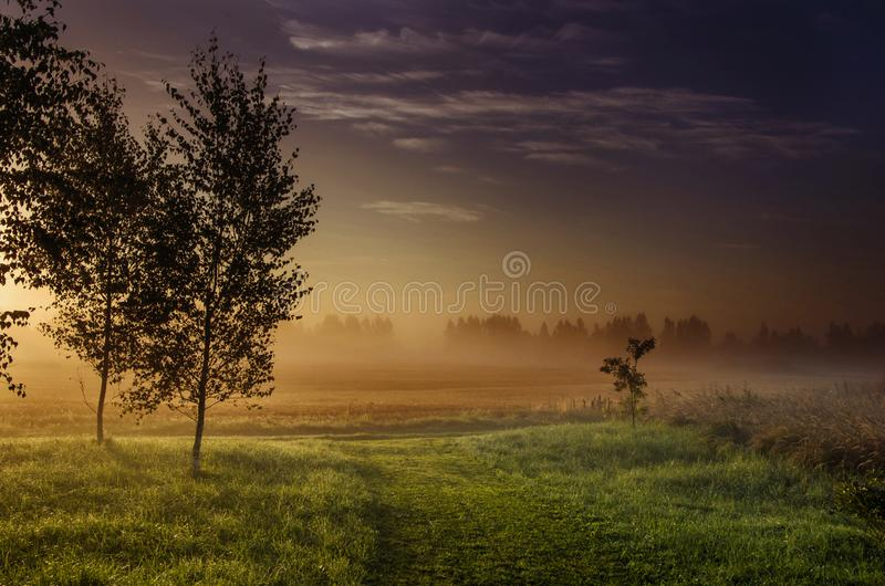 Landscape Photography Green Grass-field Beside Dark Foggy Forest during Golden Hour royalty free stock photography