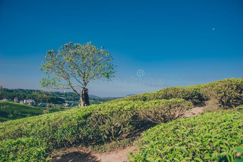 Landscape Photography of Green Tree royalty free stock image
