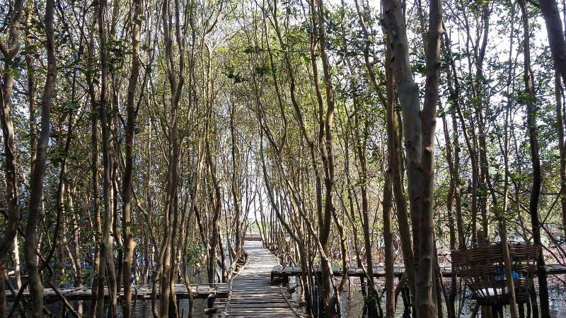 Landscape Photography. Hutan Mangrove, Kulon Progo, Indonesia royalty free stock images