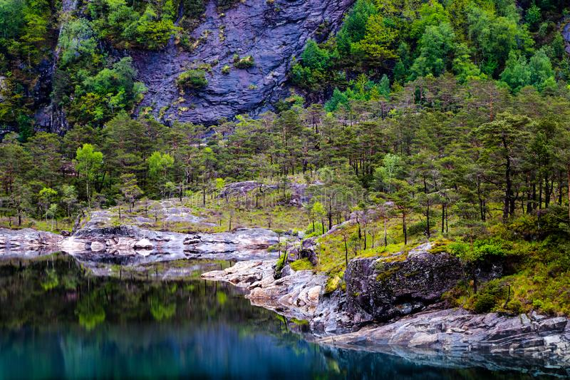 Landscape Photography of Lake and Trees royalty free stock image