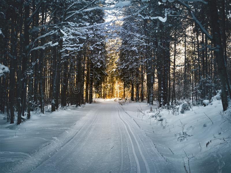 Landscape Photography of Snow Pathway Between Trees during Winter stock image