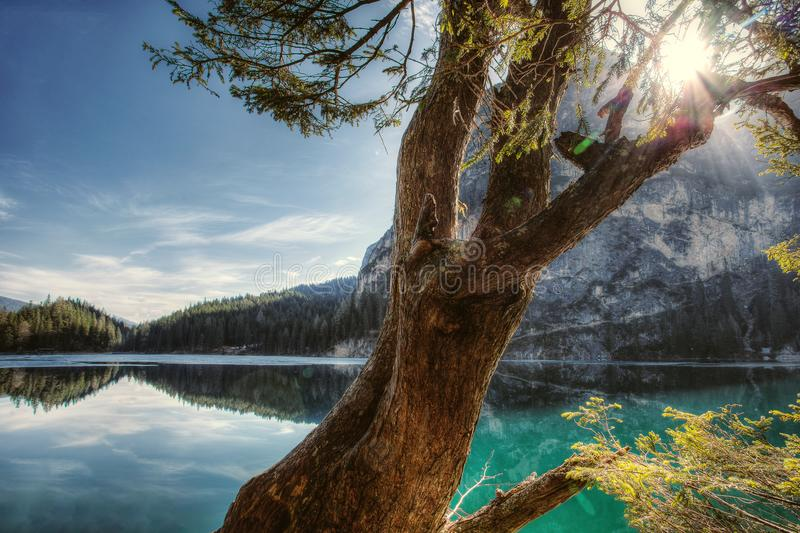 Landscape Photography of Tree and Sea royalty free stock photo
