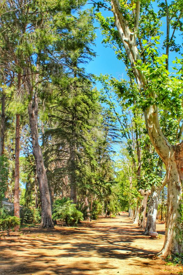 Landscape photography with trees inside the park Sama de Cambrils stock images