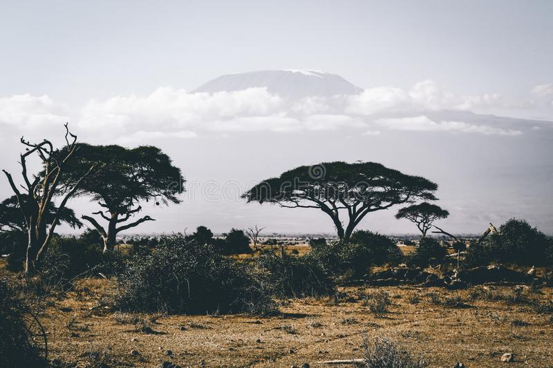Landscape Photography of Wild Trees over Mountain stock images
