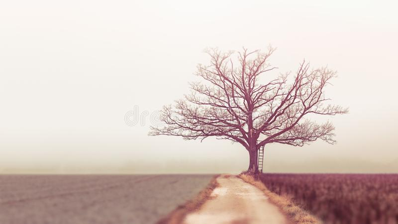 Landscape Photography of Withered Tree stock photo