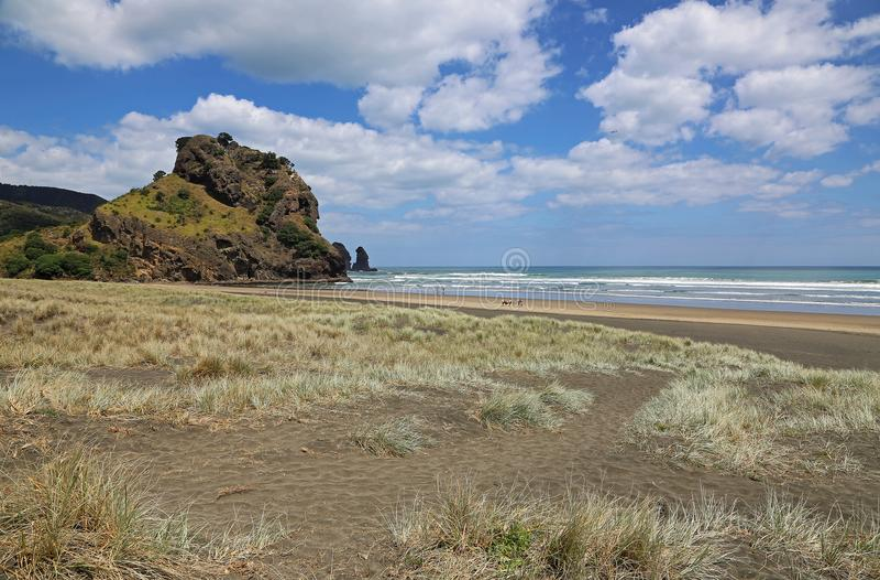 Lion Rock on Piha Beach. Landscape with Piha Beach, New Zealand royalty free stock image