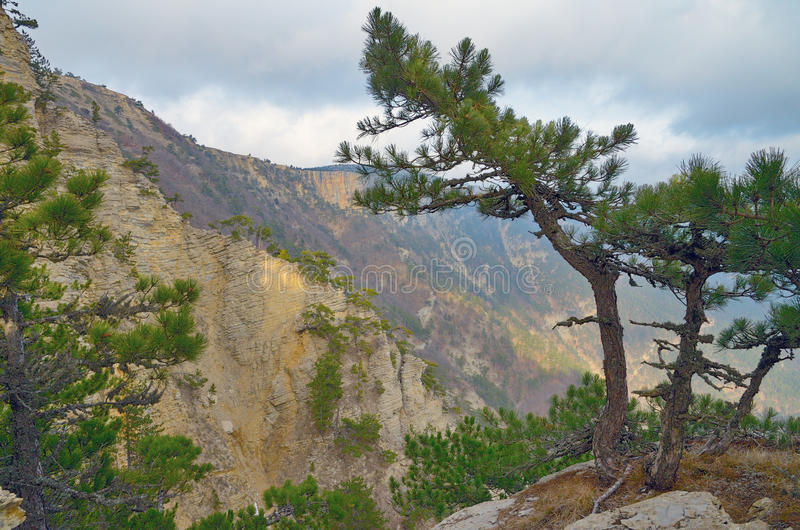 Landscape with pine tree on steep slope stock photography