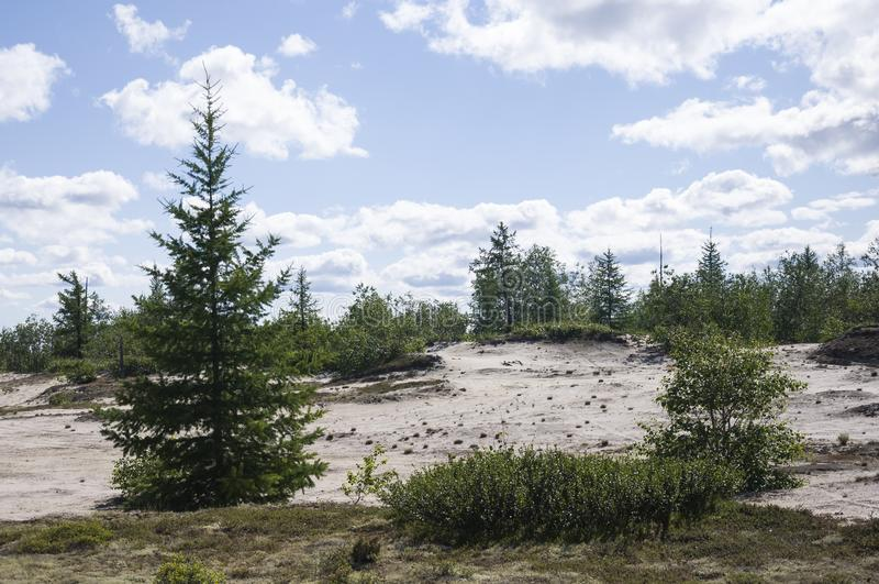 Landscape with pines, spruces, larches and birches. Bright summer day with blue sky, white clouds and yellow sand.  stock images