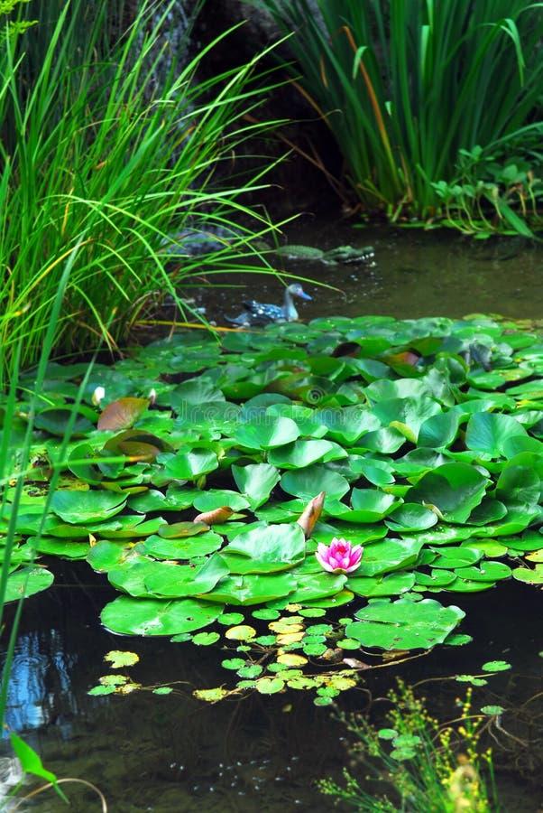 Landscape pond stock photo