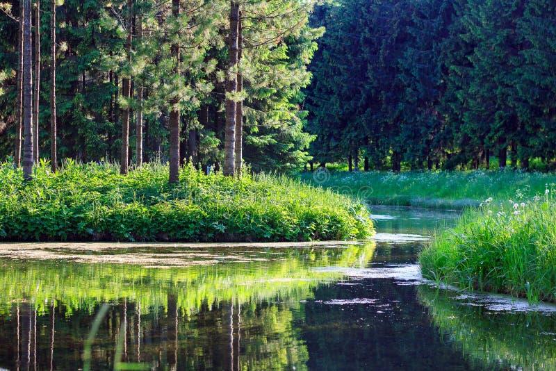 Summer woods and pond. Landscape. stock image