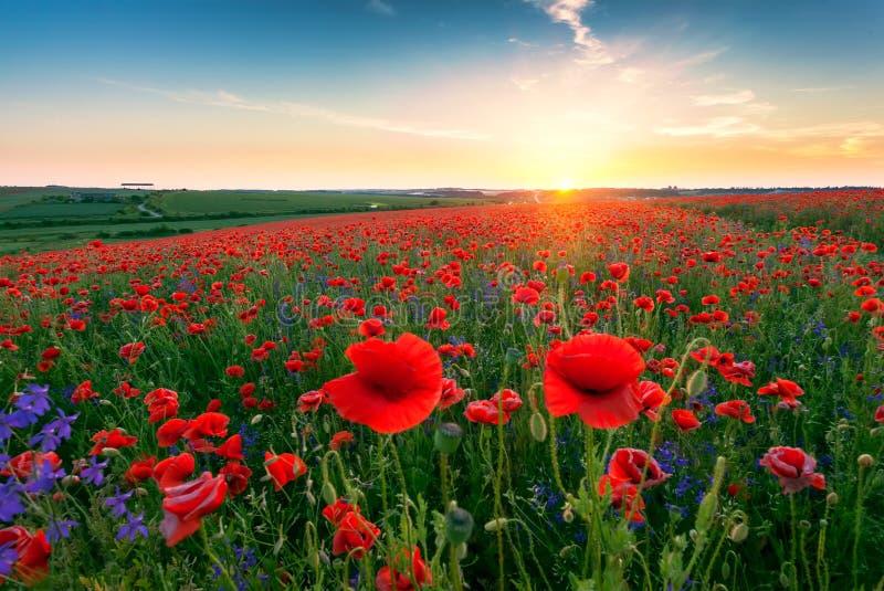 Landscape with poppy field stock photo