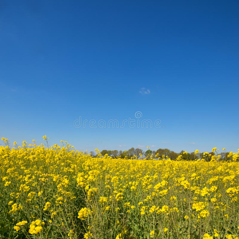 Landscape with seed. And blue sky stock photos