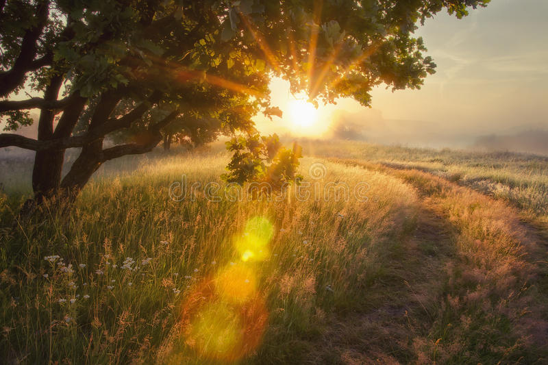 Landscape rays of sun through branches of tree. early autumn on morning sunrise Solar glare stock image