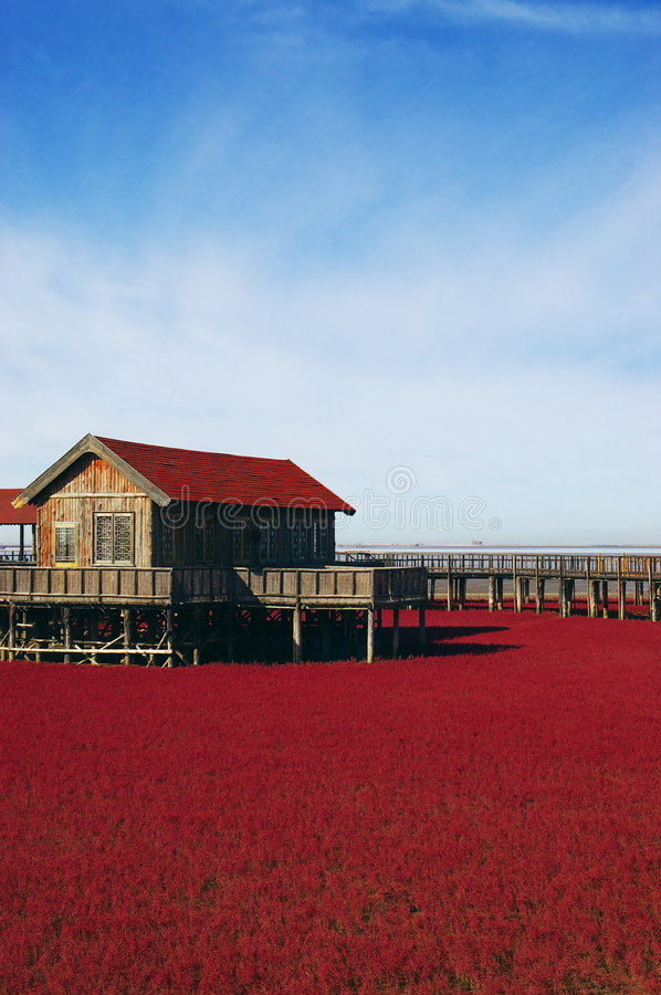Landscape Of Red Grass Near The Sea Stock Photos