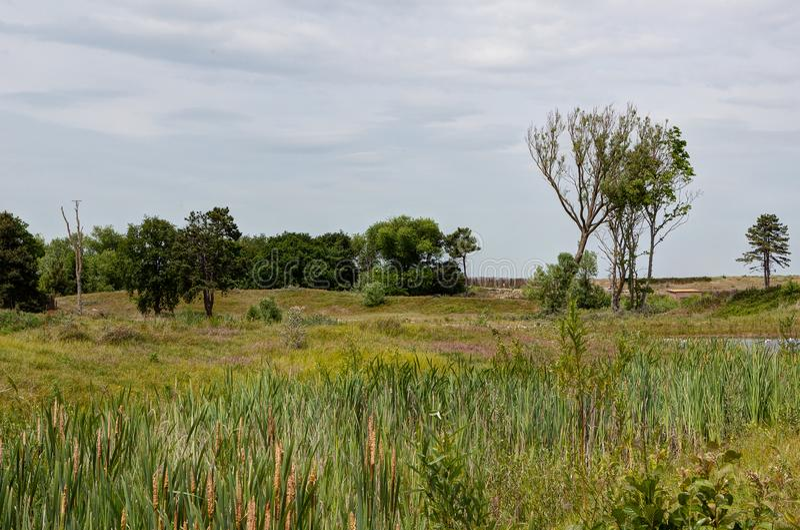 Nature reserve, Zwin, Bruges, Sluis, Belgium, Netherlands stock images