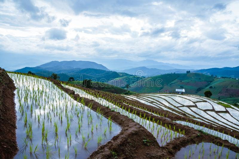 Landscape rice field Nature Tours On a mountain with a terraced field Evening landscap. in Thailand Pongpeng Forest royalty free stock photo