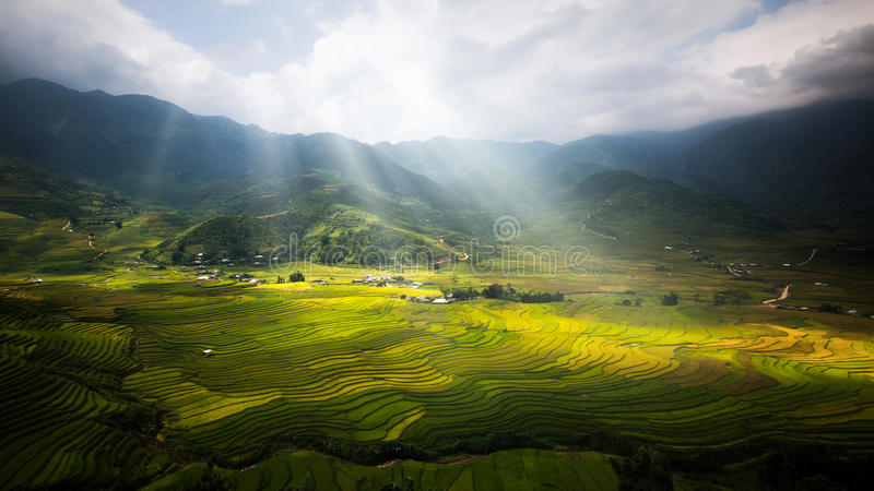 Landscape of rice field in Tule. Near Sapa and Mu Cang Chai in Vietname stock image