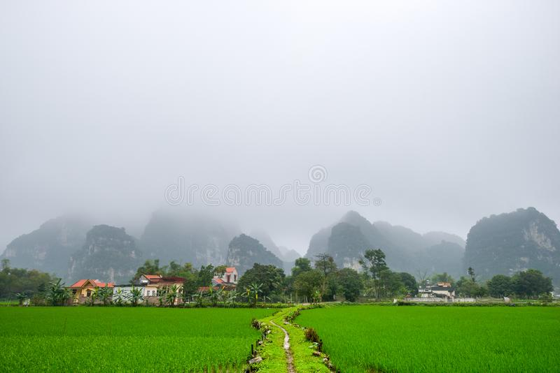 Landscape with rice fields royalty free stock photo