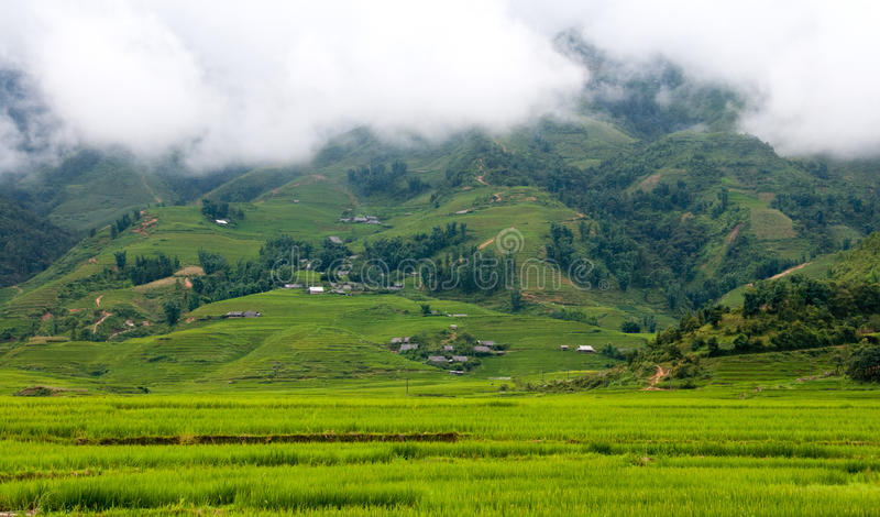 Landscape with rice fields in Vietnam royalty free stock photography