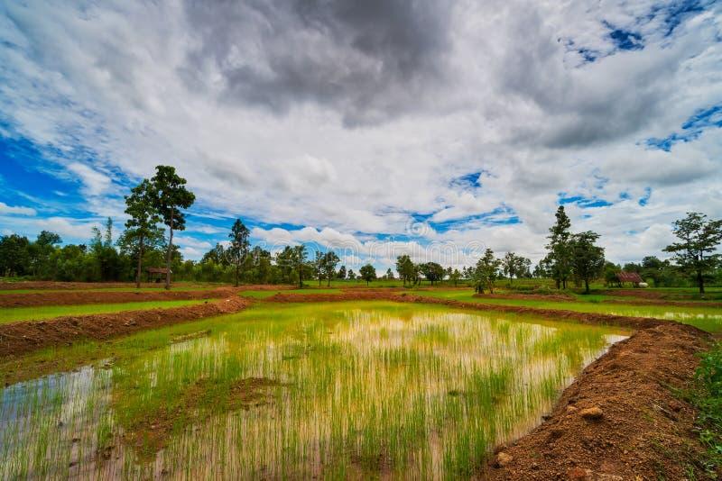 Landscape Rice Paddy royalty free stock photography