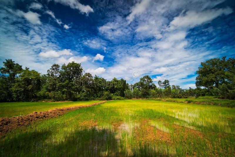Landscape Rice Paddy royalty free stock image
