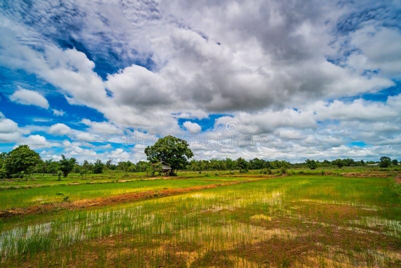 Landscape Rice Paddy stock photography