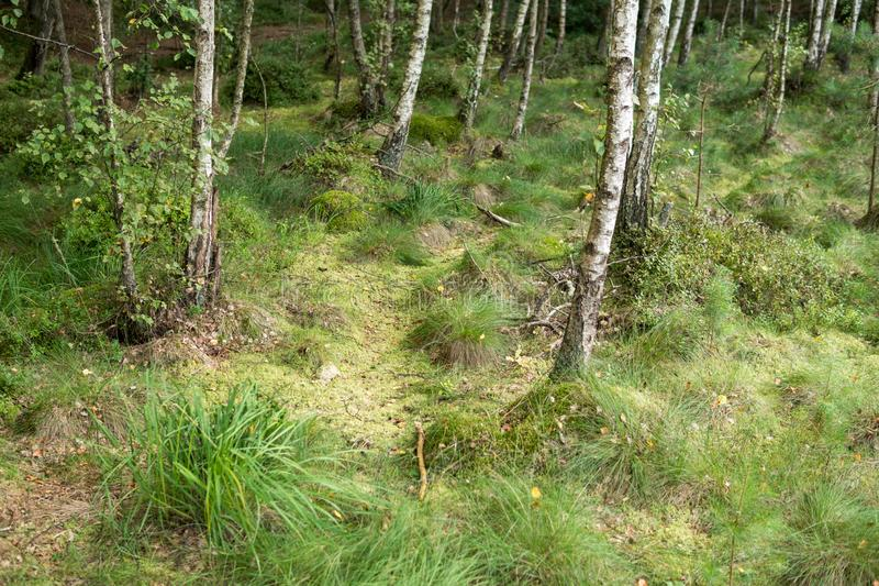 landscape of a Riparian forest stock photography
