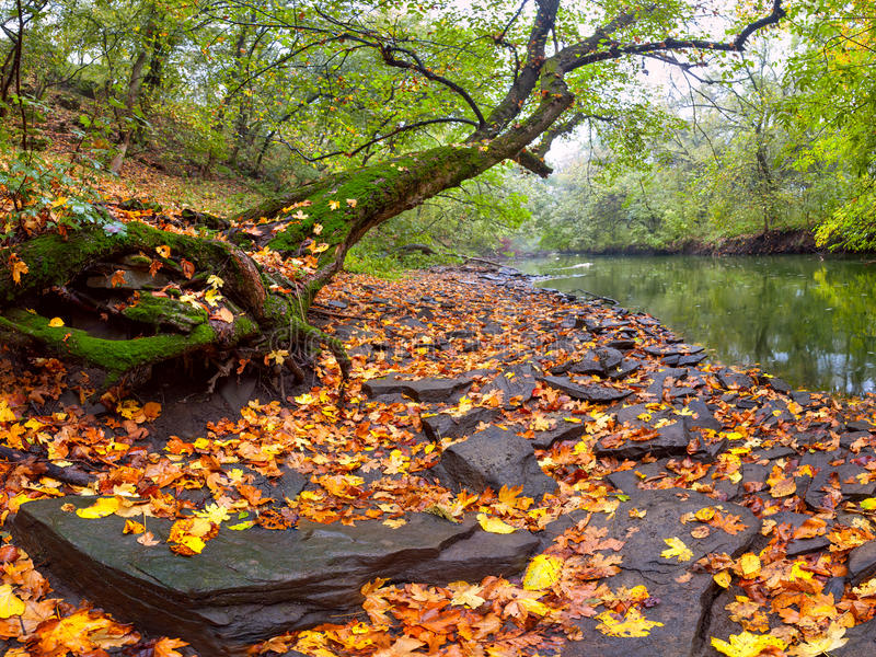 Download Landscape With River And Big Tree Stock Photo - Image of autumn, park: 26847596