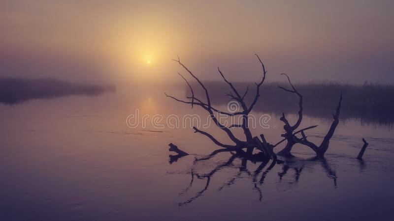 Landscape of river on morning misty sunrise. Old dry tree in water in early foggy dawn. Scenic river stock photos
