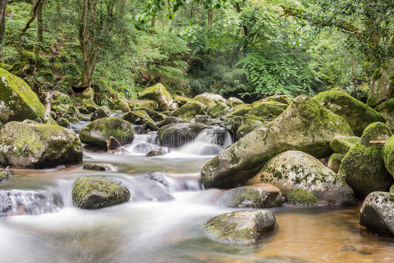 Landscape of river Plym royalty free stock photo