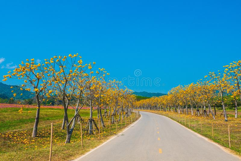 Landscape of road and beautiful yellow flowers in blue sky. royalty free stock photo