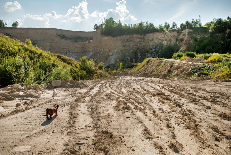 Landscape with a road. Dog on a road to the clay quarry stock image