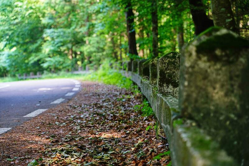 Landscape with road trip in the forest 5 royalty free stock photo