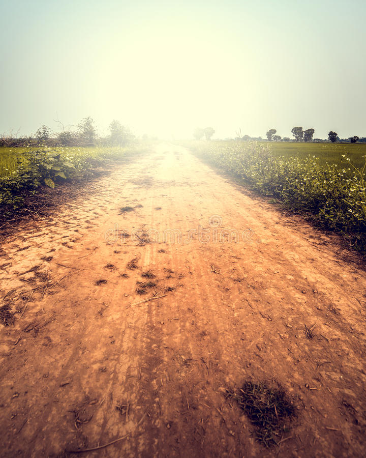 Landscape of road way in summer with wild flower stock photography