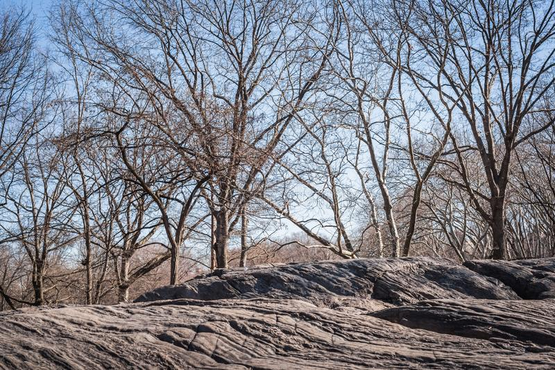 Landscape of the rocks of Central Park overlooking the woods with the branches of the trees without leaves of the end of the stock image