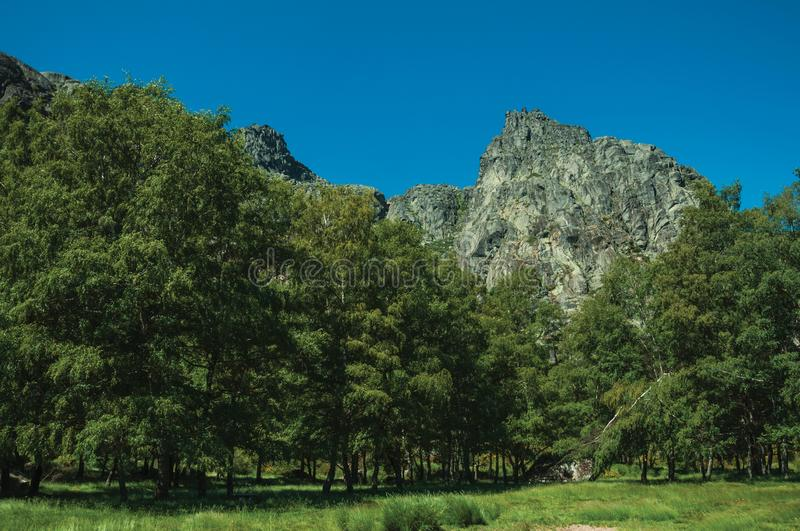 Landscape with rocky cliffs covered by bushes and forest. Mountainous landscape with rocky cliffs and lawn on a glade at forest fringe, in the highlands of the stock images