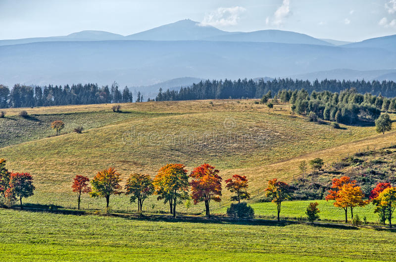 Landscape with row of colorful trees. Autumn landscape with row of colorful trees stock image