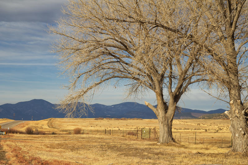 Landscape of rural New Mexico. Two tall bare trees on brown grass with mountains in the background stock images