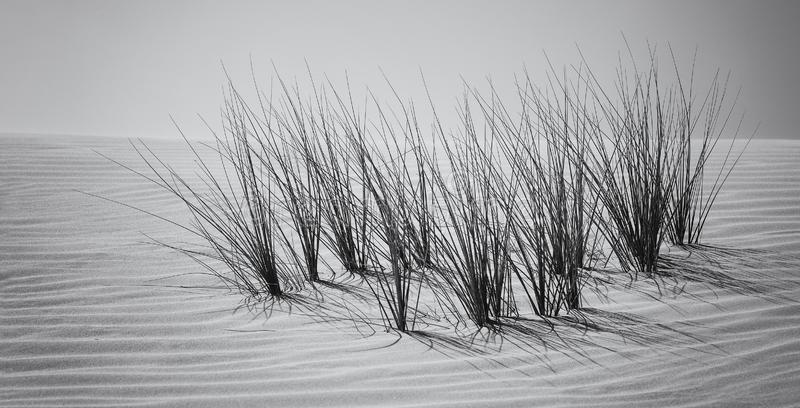 Landscape of sand dune and grass with wind pattern artistic conv royalty free stock photos