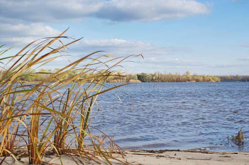 Landscape at bank of river in autumn. Landscape at sandy bank of river in late autumn. Yellowed reed bent by the wind against the background of blue water in royalty free stock photos