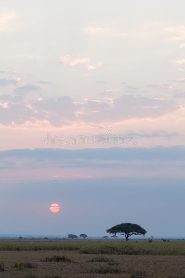 Landscape in the Savannah Amboseli. Kenya, Africa royalty free stock images